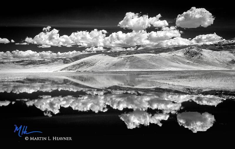 Both Sides Now - Elk Refuge, Jackson Hole WY - ID: 15178067 © Martin L. Heavner