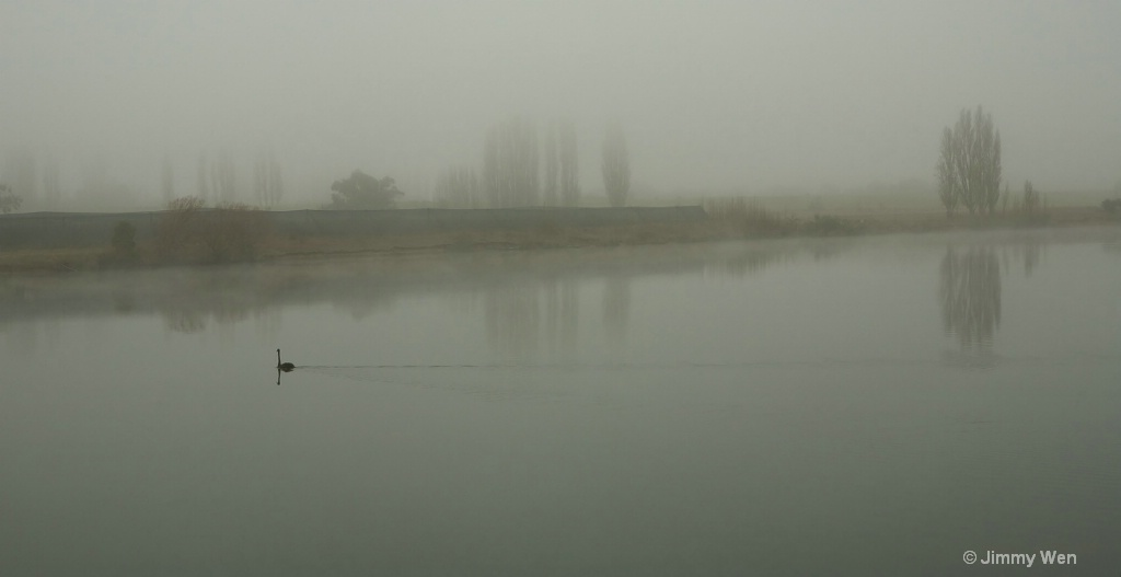 A lonely swan-Misty-3
