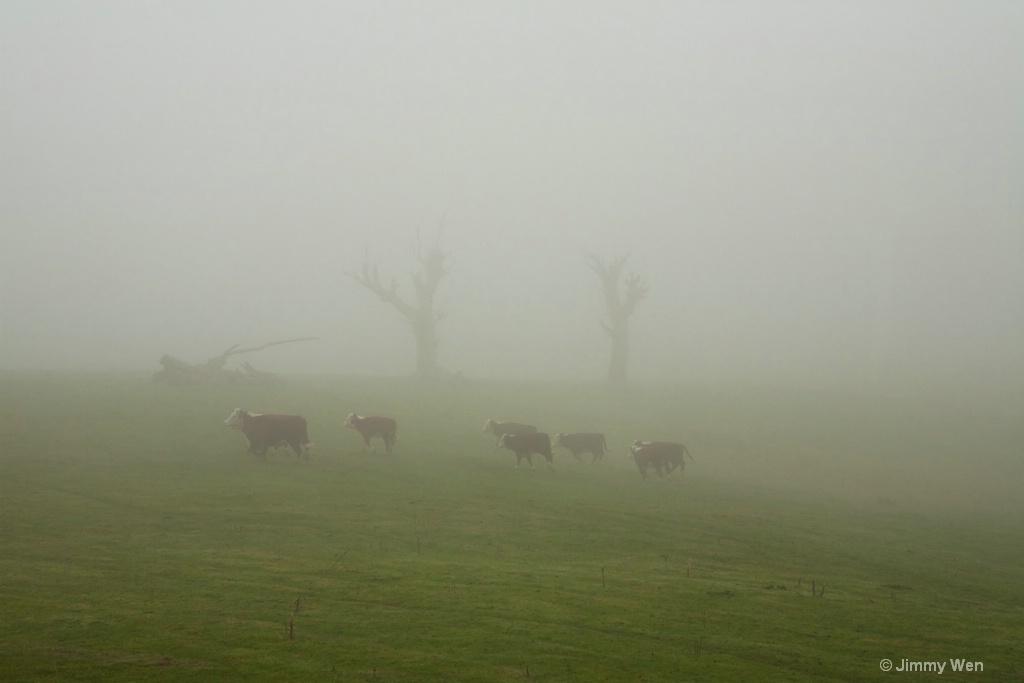 A few cows-Misty-2
