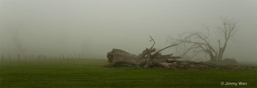 A dead tree-Misty-1