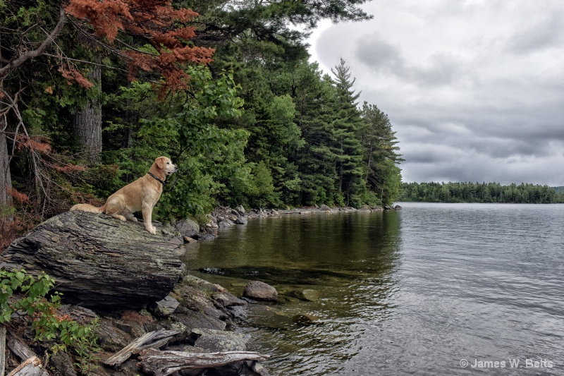 Marley in Maine...