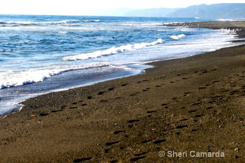 West Coast - ID: 15200662 © Sheri Camarda