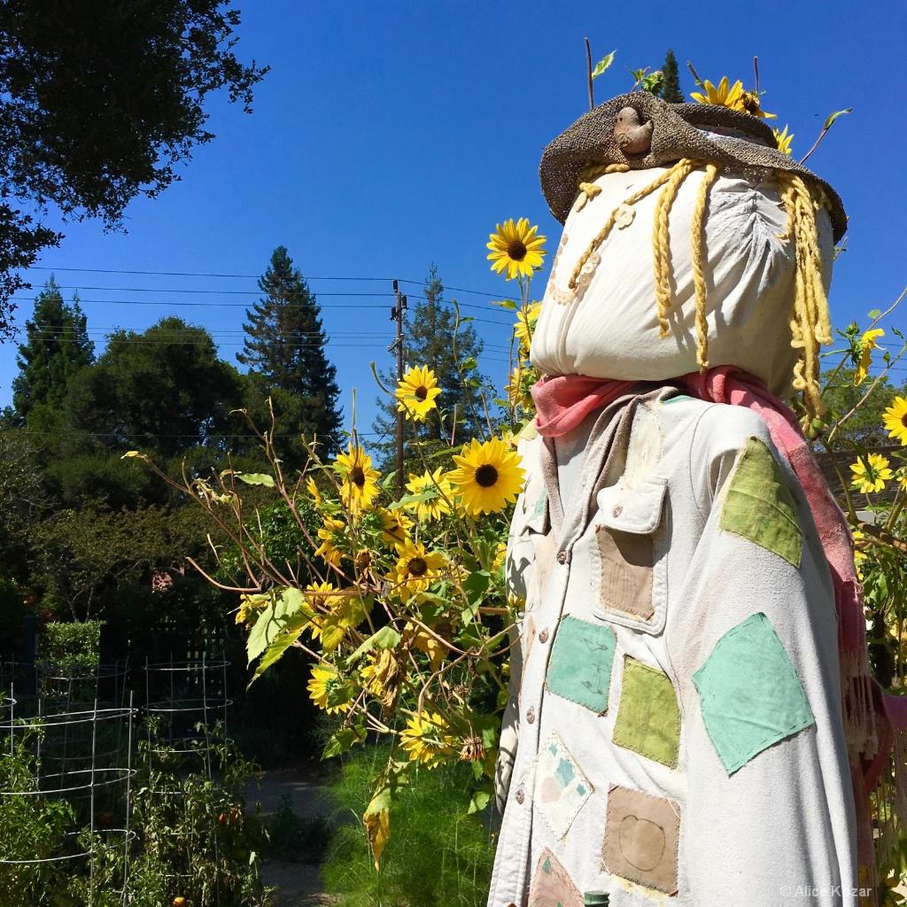 Who's Afraid of a scarecrow? - ID: 15208404 © Alice Kozar