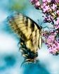 Fluttering Wings