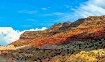 New Mexico Landsc...