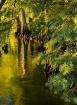 Among the Cypress