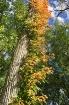 Fall begins in Po...