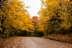 Country Road Fall...