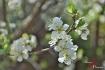Sunlit blossom