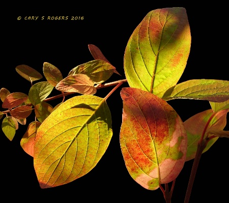 Dappled Autumn Leaves Collage
