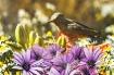Hummingbird in th...