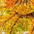 © Jeff Robinson PhotoID # 15265300: Under-Cover Autumn