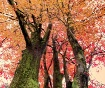 Autumn Looking Up