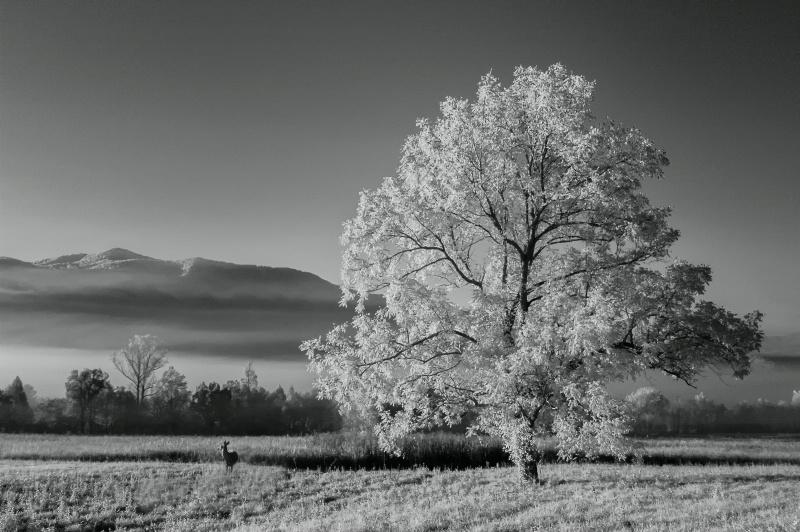 Doe in the Morning Sun - ID: 15266918 © Bill Currier