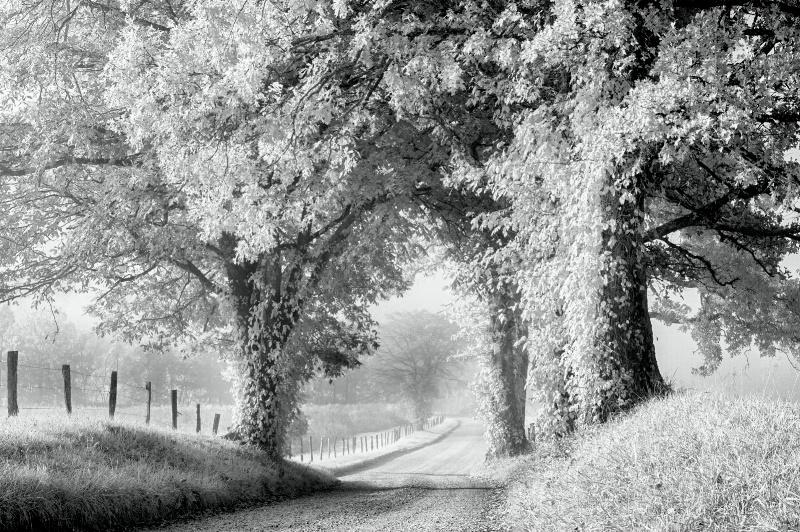 Hyatt Lane - ID: 15266919 © Bill Currier