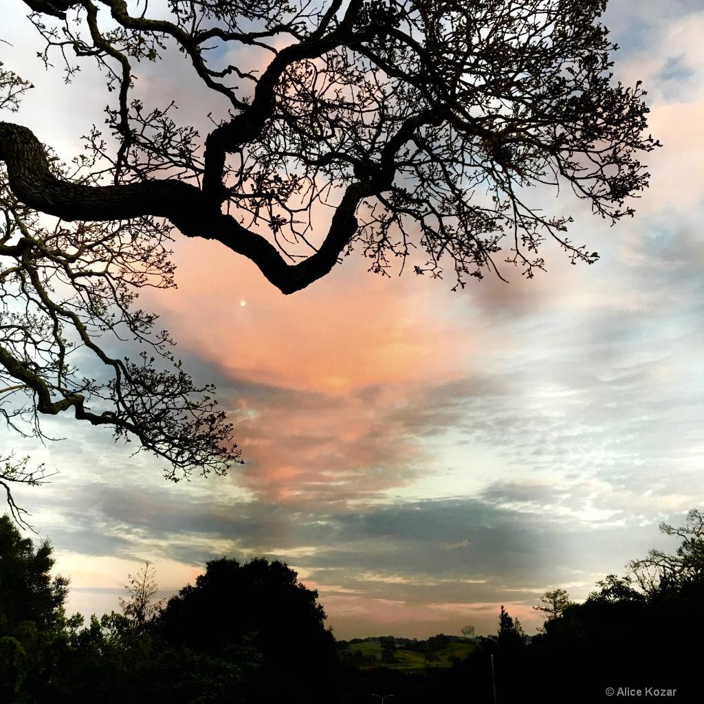 Peek-a-Boo Moon Spooky Sunset - ID: 15269923 © Alice Kozar