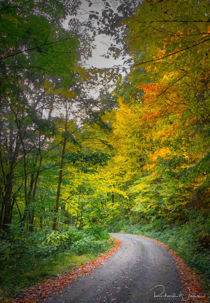 Road to the Light - ID: 15270794 © Richard M. Waas