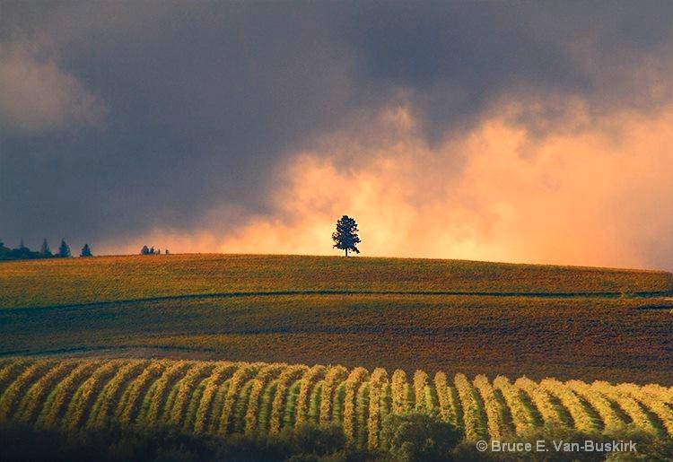 Home sweet home - ID: 15271304 © Bruce E. Van-Buskirk