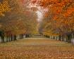 Fall on Ohio Boul...