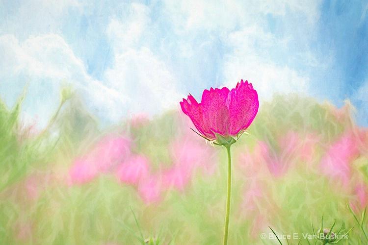 splash of color - ID: 15275246 © Bruce E. Van-Buskirk
