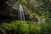 Rainforest Shelte...