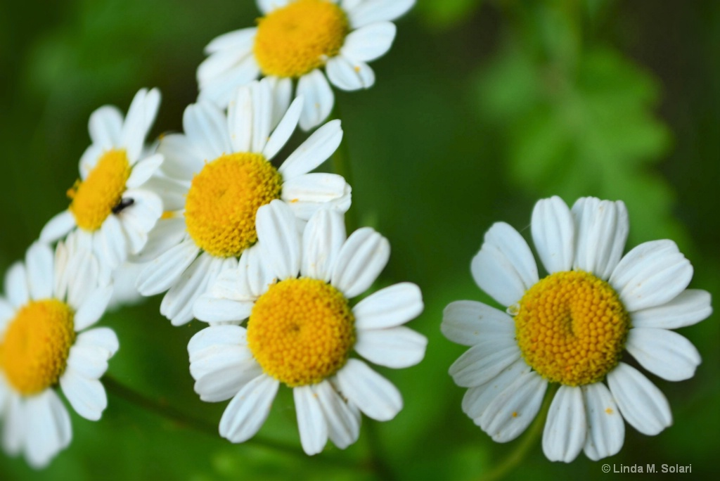 Flower Power - ID: 15282008 © Linda M. Solari