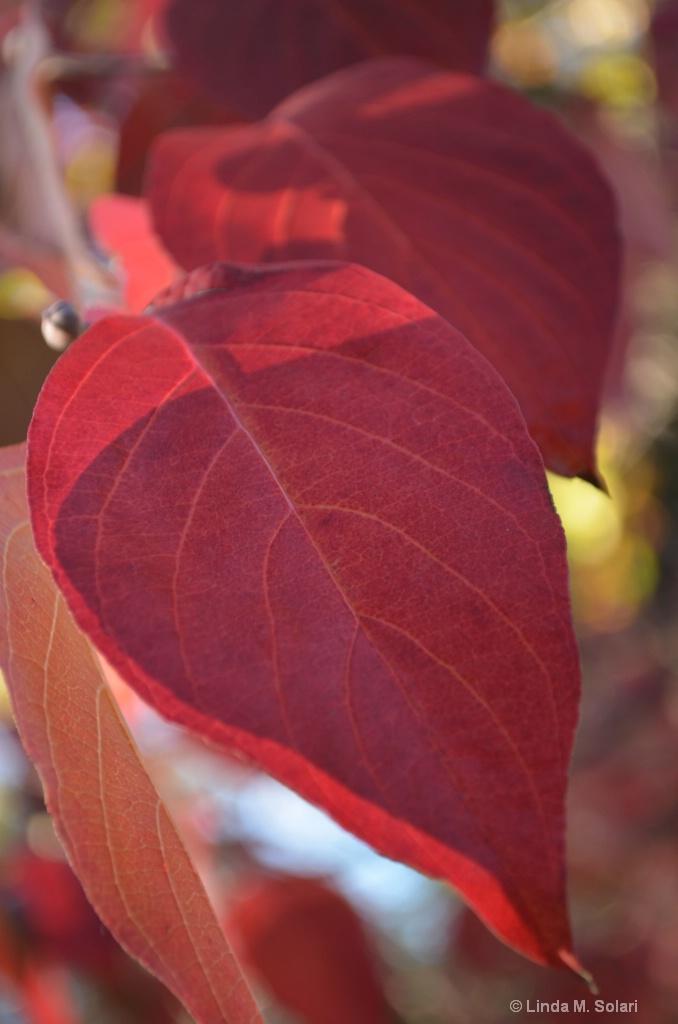The Hearts of Autumn - ID: 15282010 © Linda M. Solari