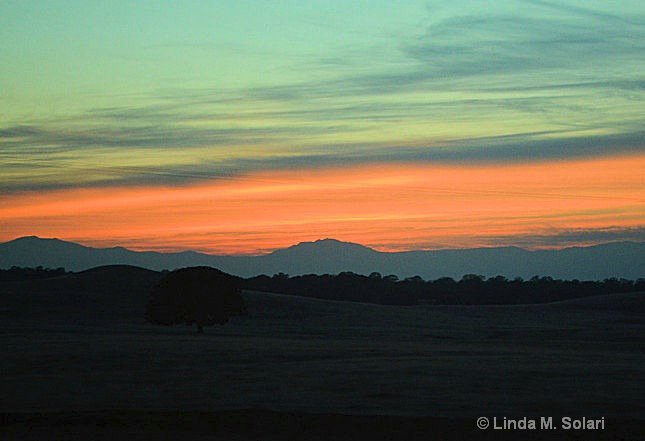 Sunset On An Oak - ID: 15282019 © Linda M. Solari