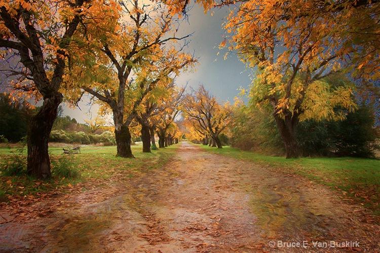 walnut row - ID: 15282582 © Bruce E. Van-Buskirk