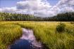 Swamp at Algonqui...