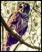 Young Barred Owl ...