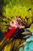 Macaw at work