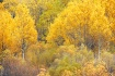 Fall Colors In Th...