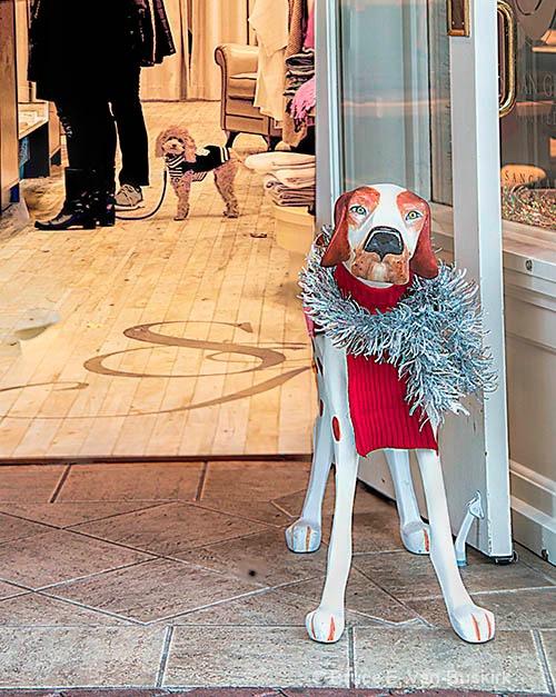 dogs - ID: 15294329 © Bruce E. Van-Buskirk