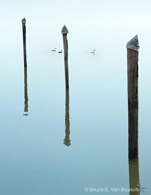 Grebe reflections - ID: 15294333 © Bruce E. Van-Buskirk