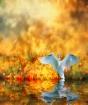 Swan Song At Suns...