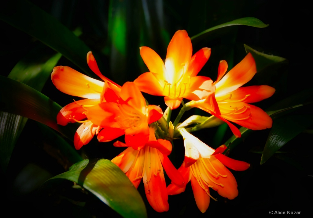OrangeBurst - ID: 15298199 © Alice Kozar