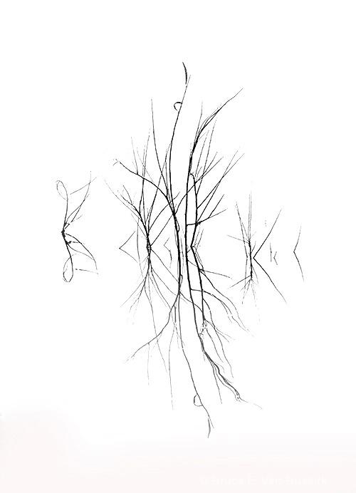 weeds in the lake. - ID: 15306037 © Bruce E. Van-Buskirk