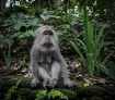 Monkey forest, Ba...