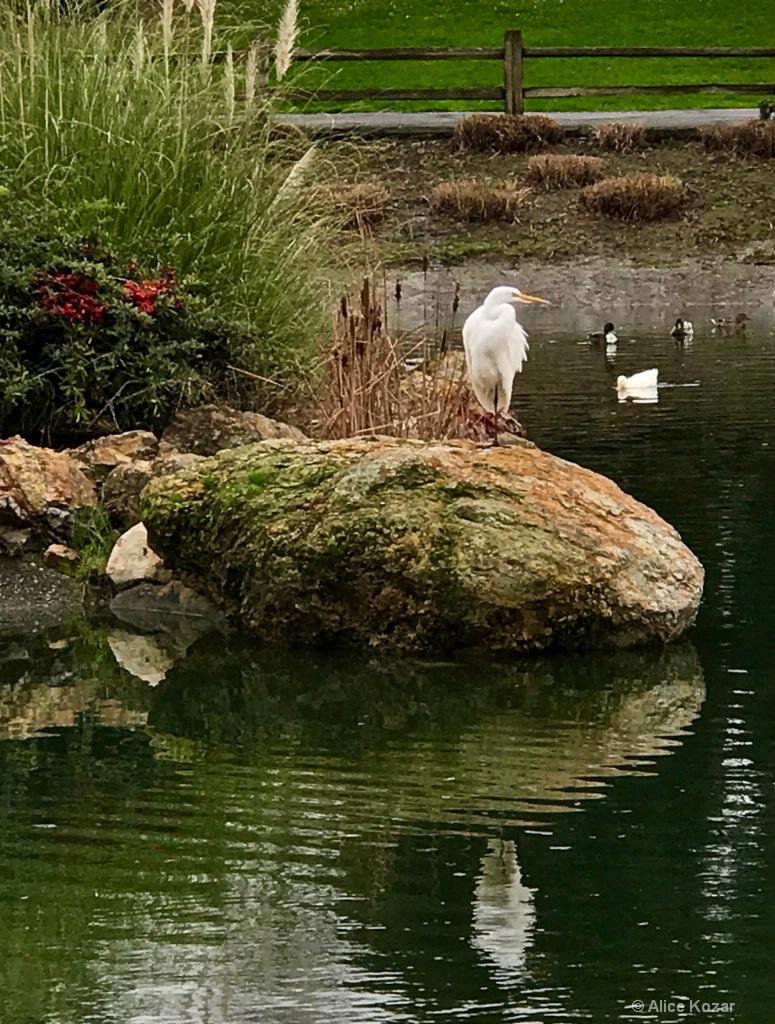 Migrating Spirit Bird - ID: 15310118 © Alice Kozar