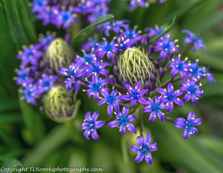 The Unknown Flower