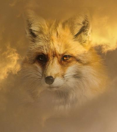 Native American Fox