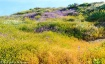 Wildflower Season...