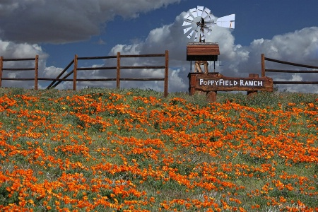 Poppyfield Ranch