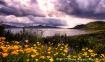 Lakeside Wildflow...
