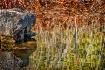 A Stake in a Lake