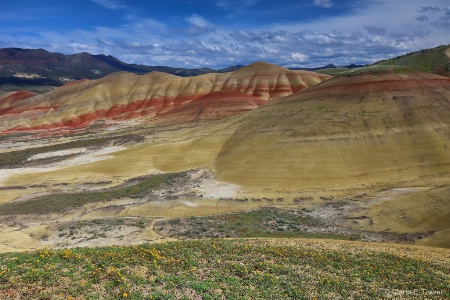 Flowers on the Painted Hills