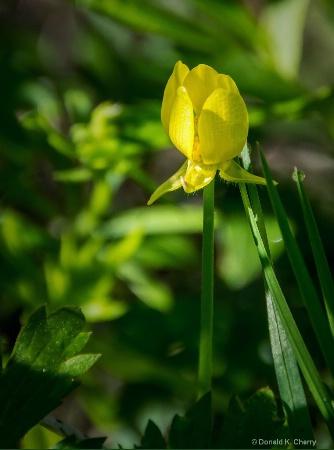 Beaty Among The Weeds