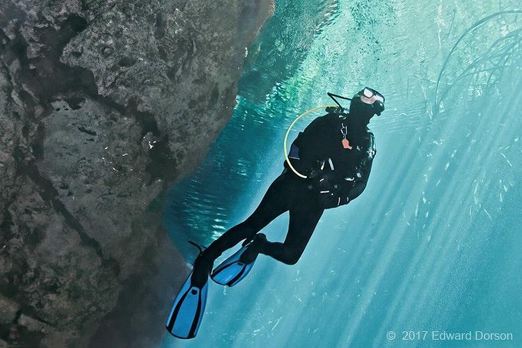 Ascending from Cenote  - ID: 15361881 © Edward Dorson