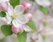 Blossom Bliss II
